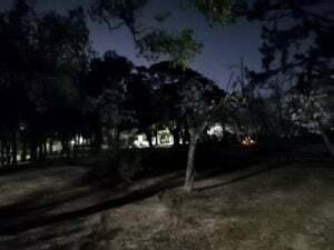 2020服部緑地公園お花見